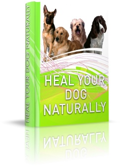 Learn natural, holistic treatments for common dog illnesses, allergies, digestive problems and more with Heal Your Dog Naturally by Dr. Sara Rooney.